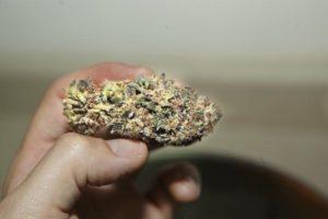My cannabis Obsession